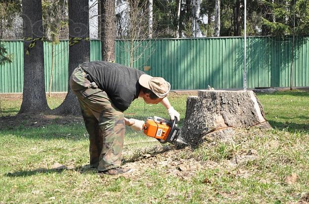 Расчистка участков от деревьев своими руками